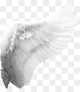 Angel Wing PNG.