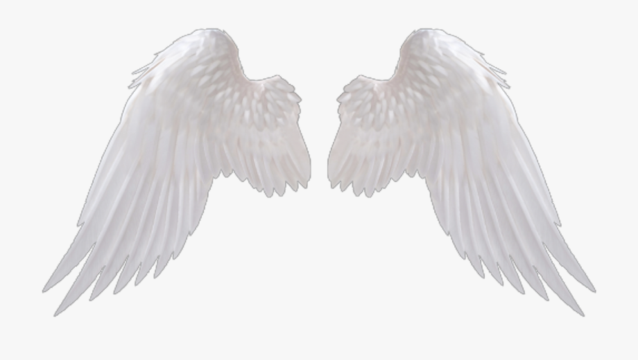 Ideas Hd Wings Png.