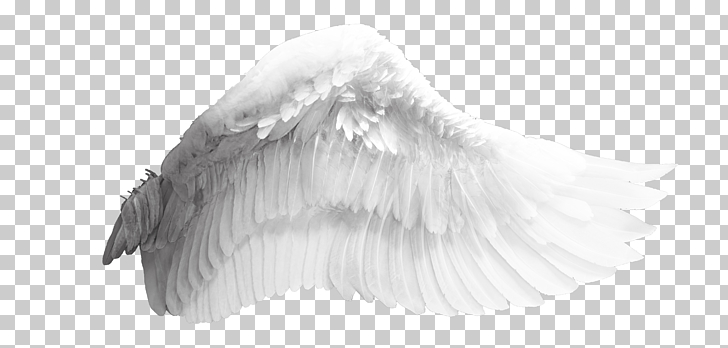 Wing Bird, Angel wings, white angel wing PNG clipart.