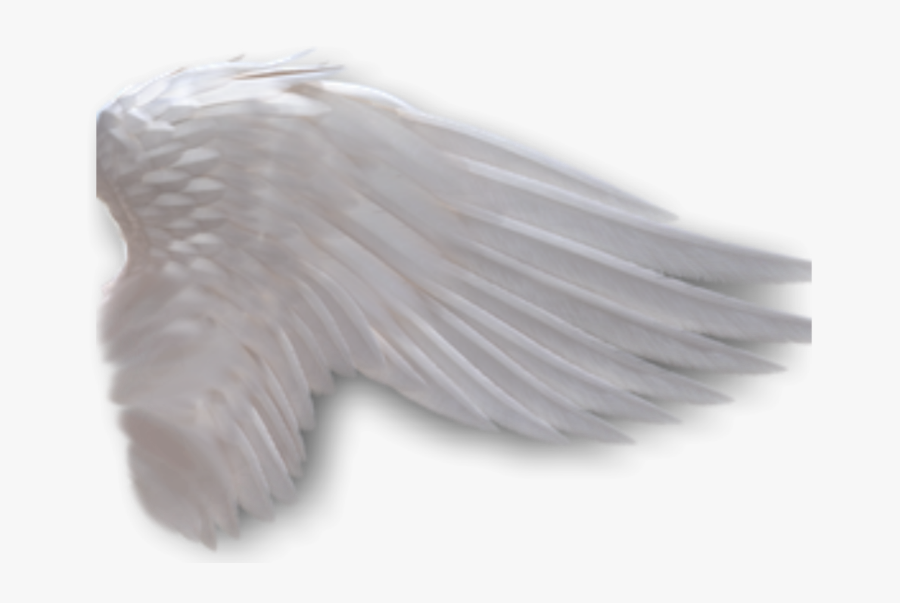 Angel Wings No Background.