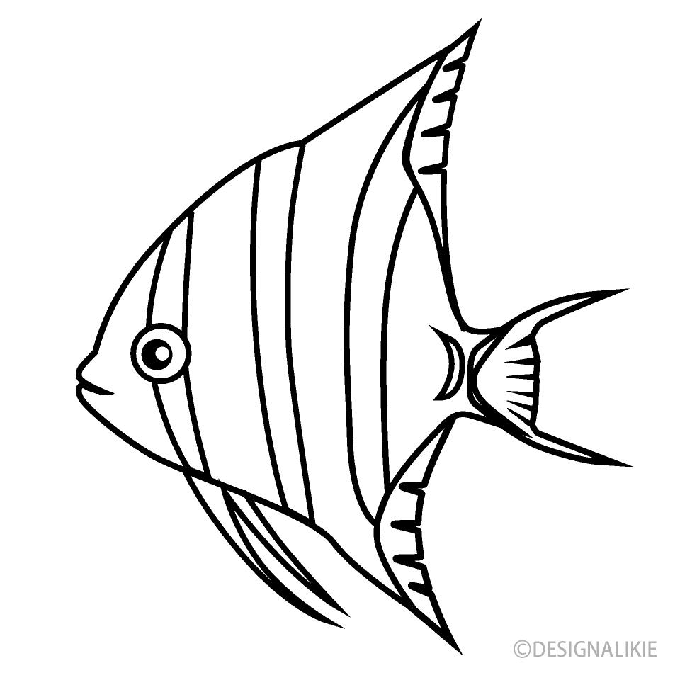 Free Altum Angelfish Black and White Image Illustoon.