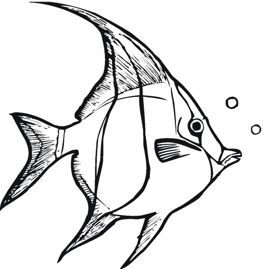 Angel fish outline clipart black and white.