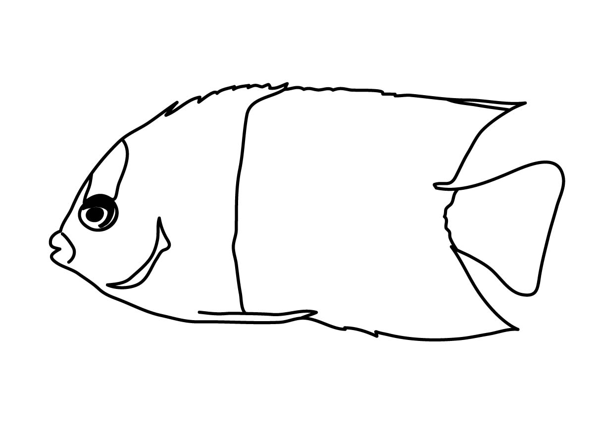 Fish black and white angel fish clipart black and white.