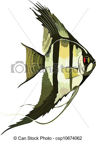 Angelfish Vector Clipart EPS Images. 452 Angelfish clip art vector.