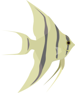 Angel Fish Clip Art at Clker.com.