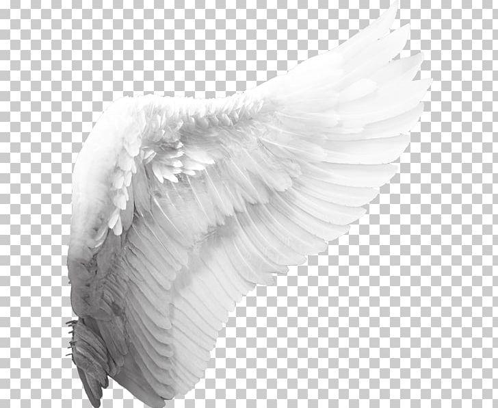 Cherub Angel Wing PNG, Clipart, Angel, Angel Wing, Angel.