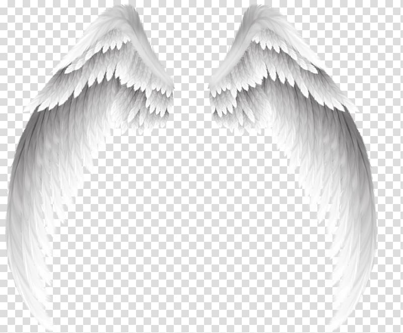 Angel , Pretty white angel wings, angel wings illustration.
