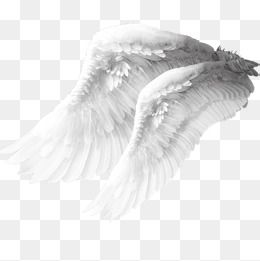 Angel Wings Material, Angel Clipart, Wings Clipart, White Wings PNG.