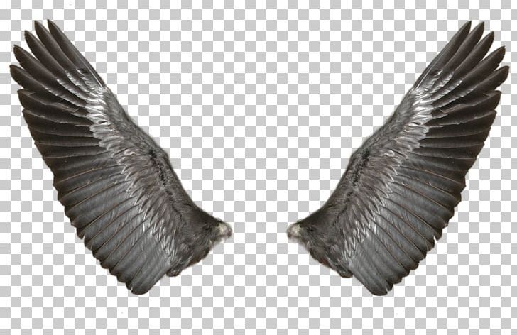 Wing Butterfly PNG, Clipart, Adobe Illustrator, Angels Wings, Angel.