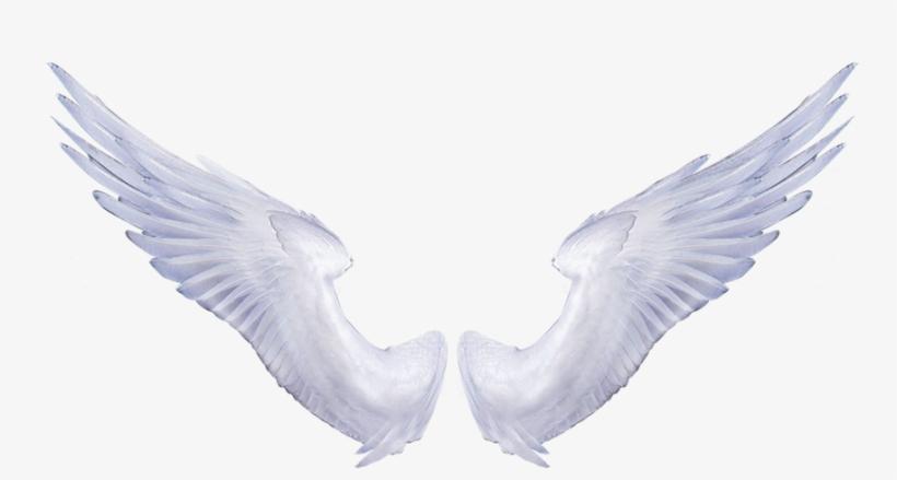 Angel Wings Png.