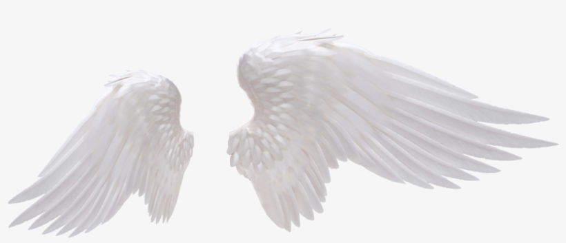 White Angel Wings Png Photo.