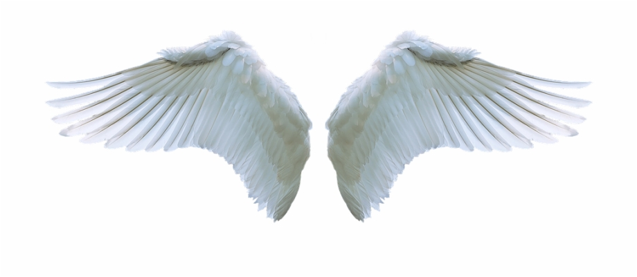 Wing Angel Swan White Swing Feather Symbol.