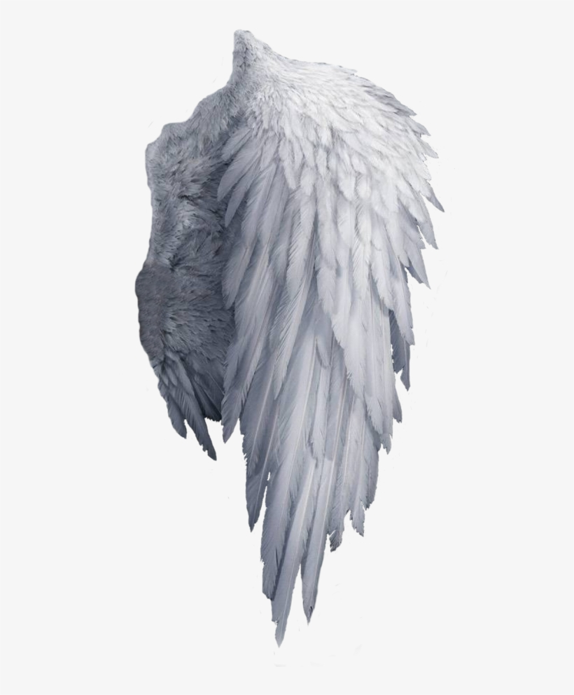 White Angel Wings Png Transparent PNG.
