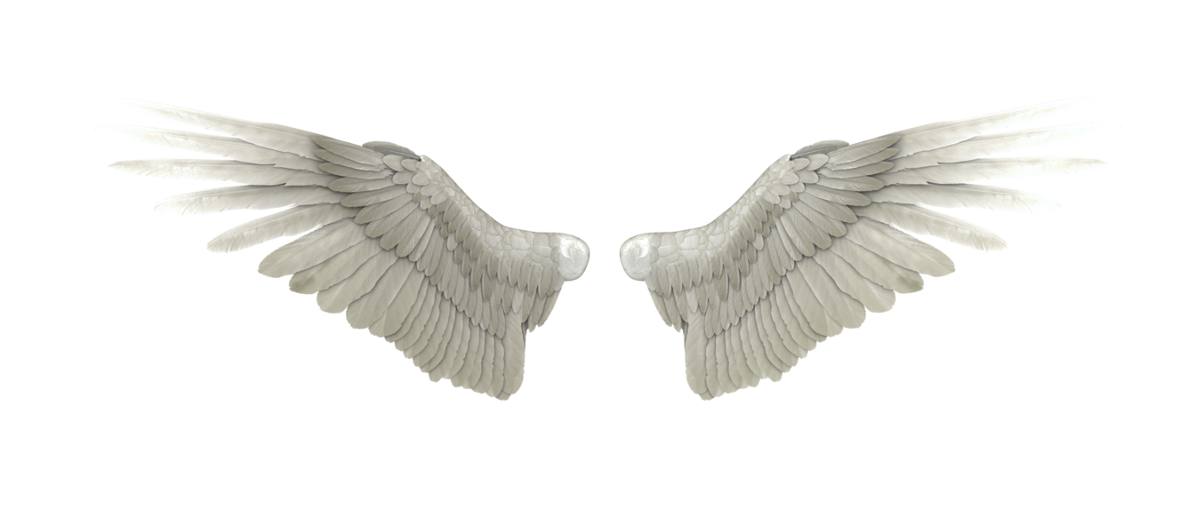 Angel Wings Hd Png, png collections at sccpre.cat.