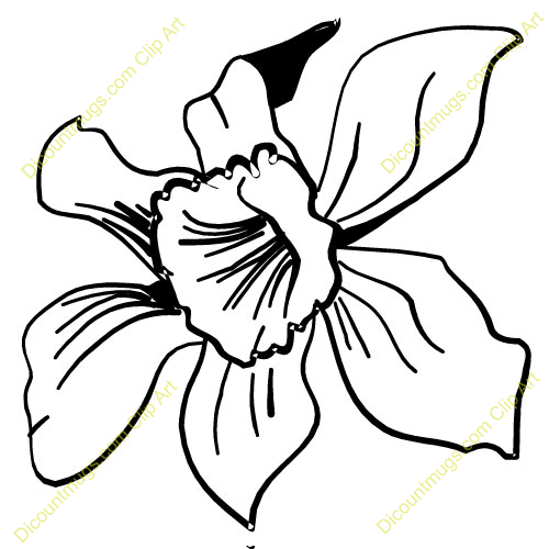 Orchid Flower Clip Art.
