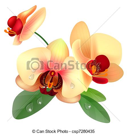 Clipart Vector of Orchid flower.