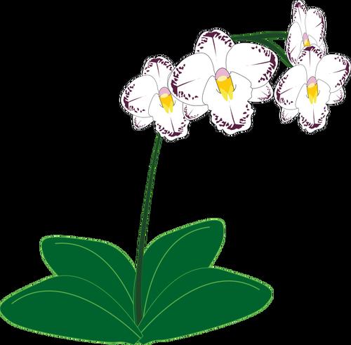 Clip Art Bunga Anggrek.
