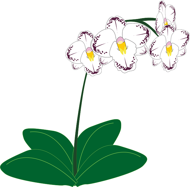 Free vector graphic: Orchid, Flower, White.