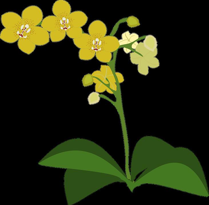 Gambar vektor gratis: Clip Art, Flor, Flora, Bunga, Alam.
