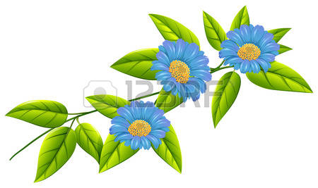 279 Angiosperms Stock Vector Illustration And Royalty Free.