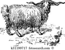 Angora goat Clipart Royalty Free. 8 angora goat clip art vector.