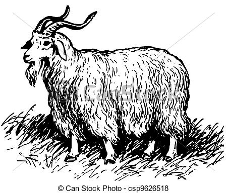 Vector of Angora goat standing on the grass csp9626518.