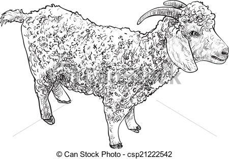 EPS Vector of Angora goat.