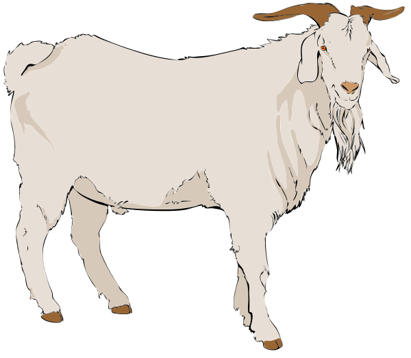Free White Goat Clipart, 1 page of Public Domain Clip Art.