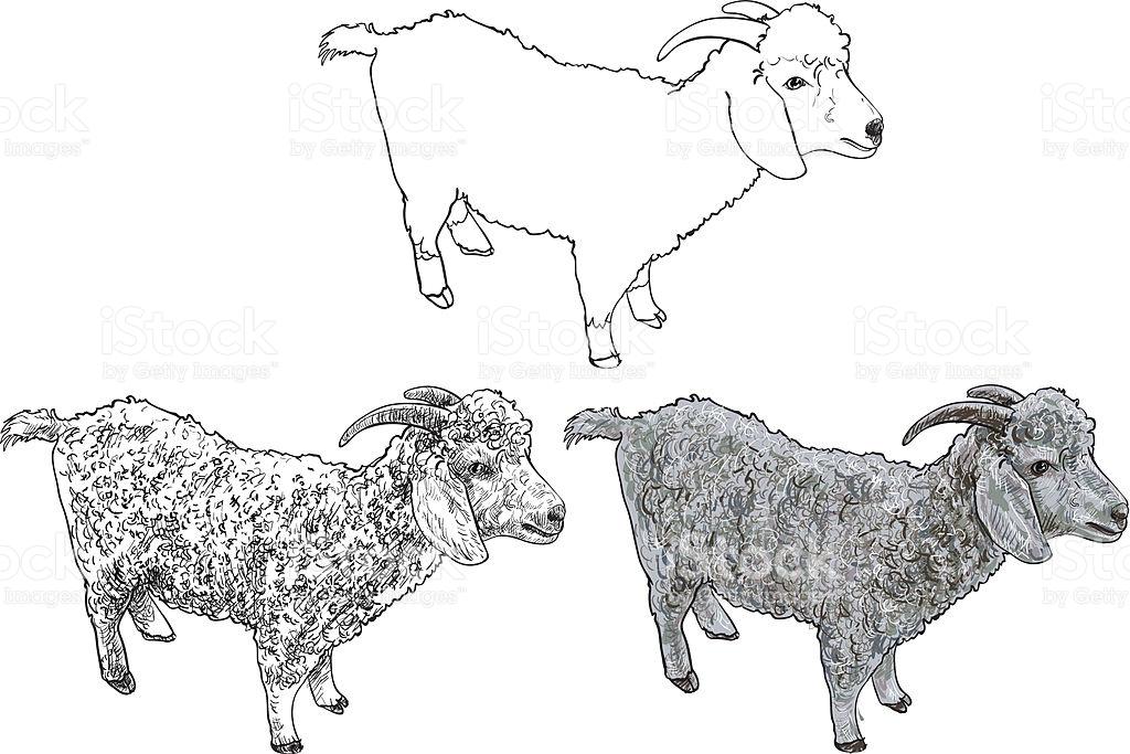 Angora Goatvector stock vector art 505148737.