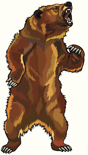 Top 60 Angry Bear Clip Art, Vector Graphics and Illustrations.
