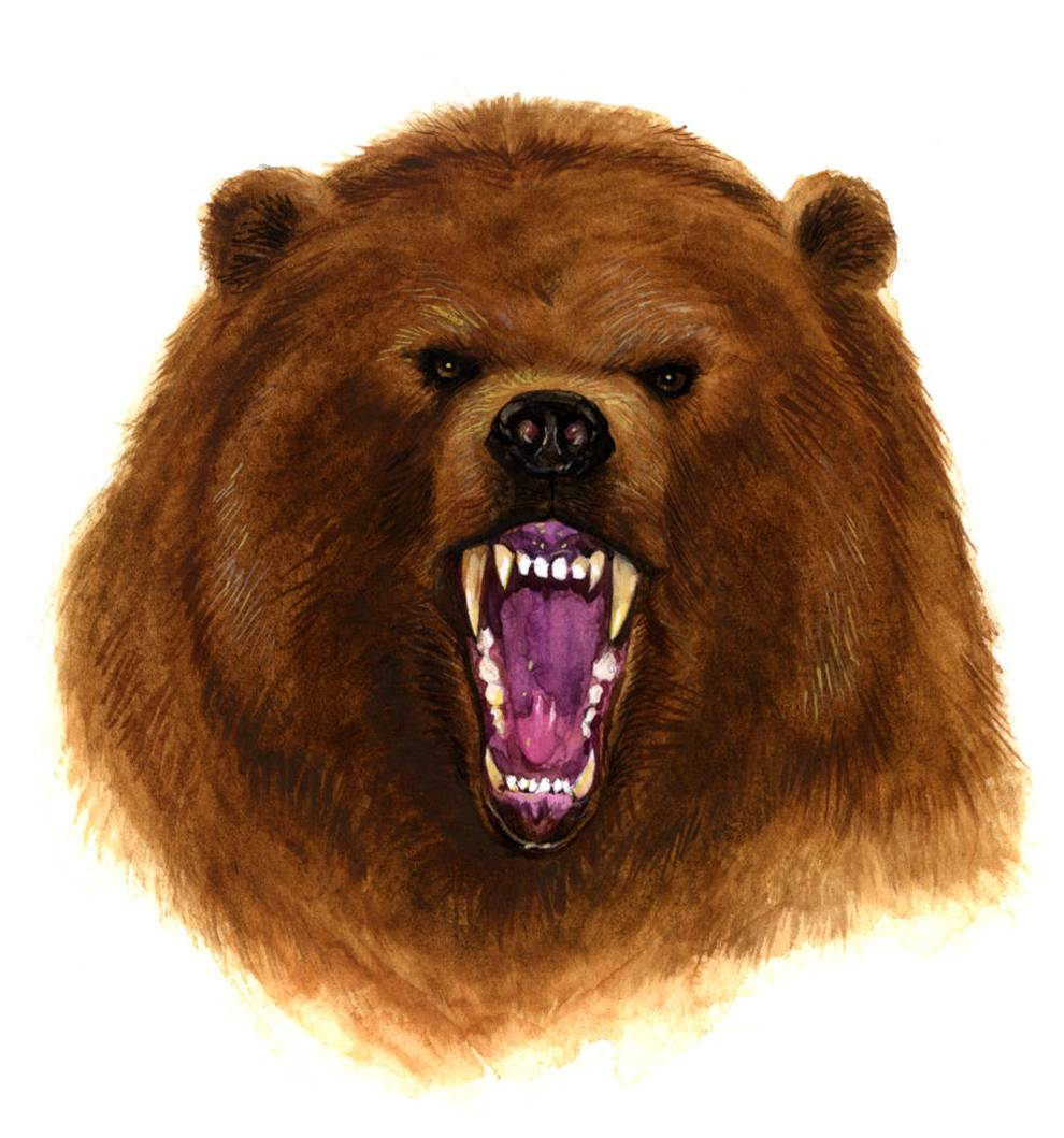 Best Angry Bear Clipart #29831.