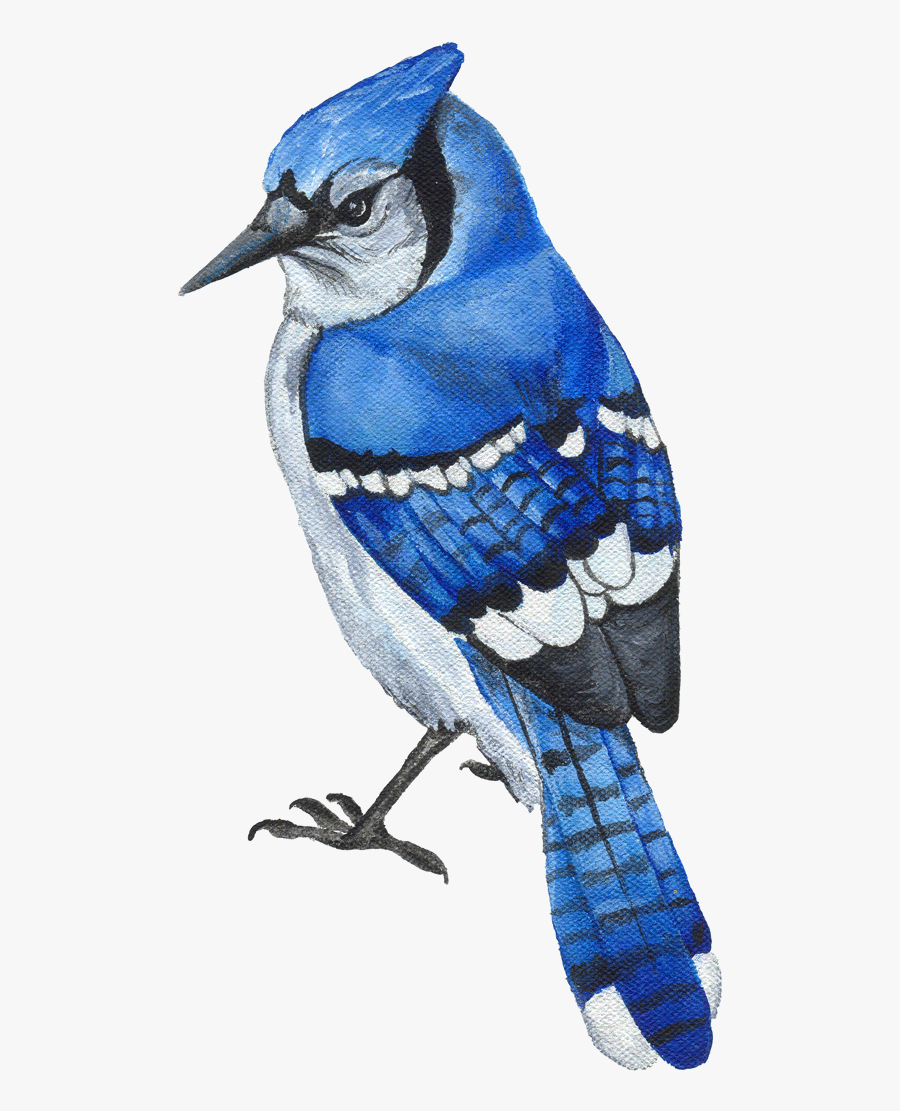 Blue Jay Clipart Transparent Png.