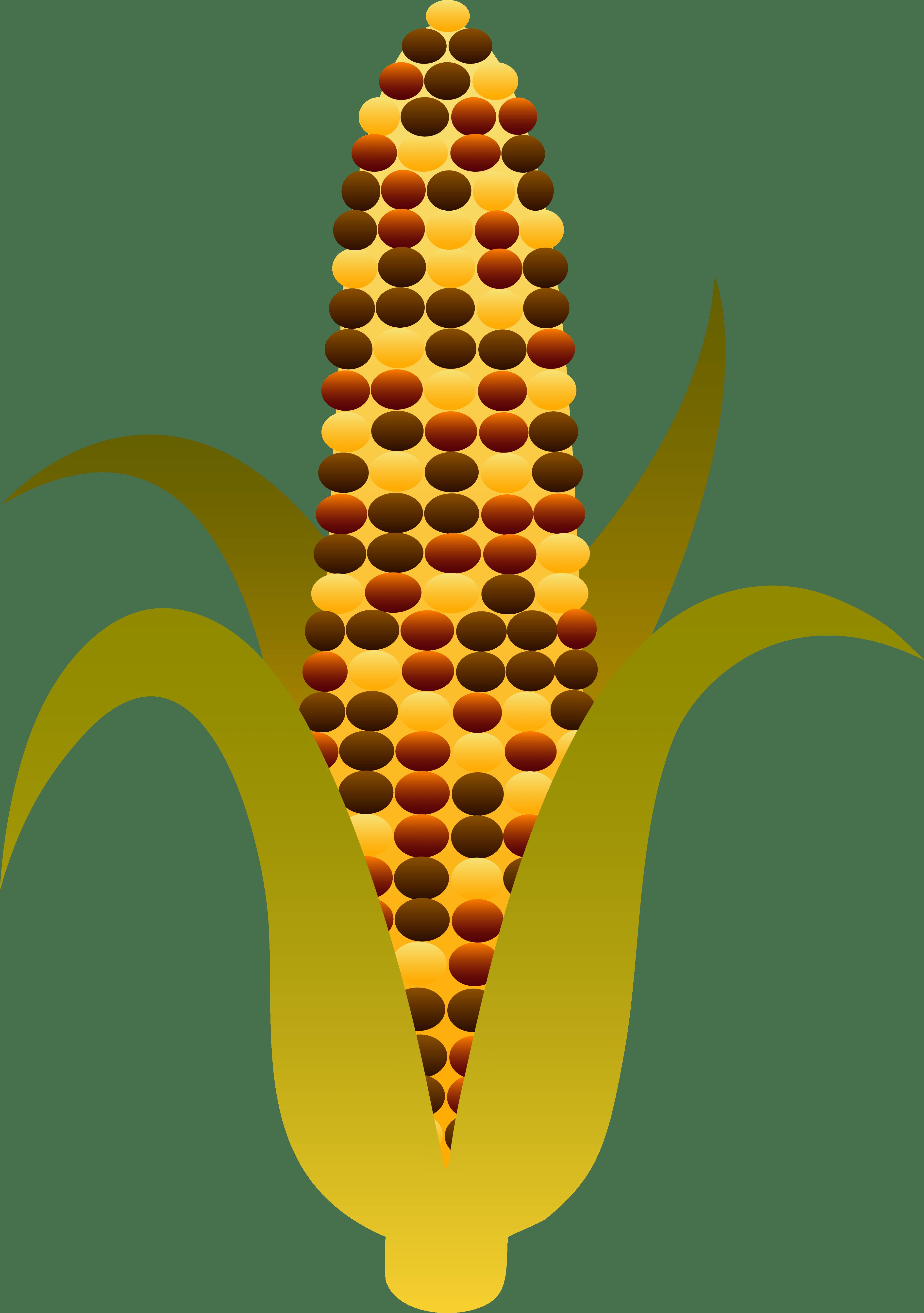 Corn clipart printable, Corn printable Transparent FREE for.