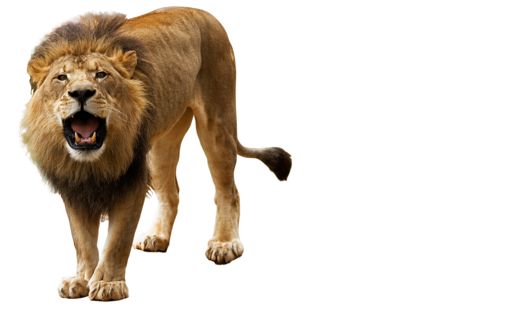 Lions clipart angry, Lions angry Transparent FREE for.