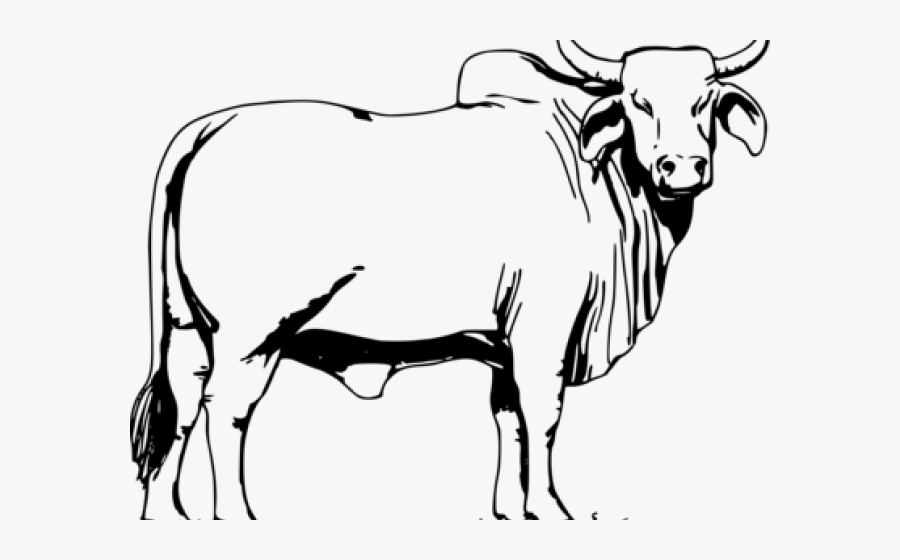Ox Clipart Angry Cow.