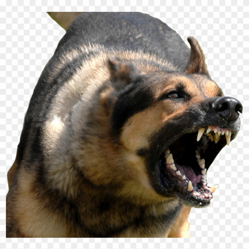 Angry Dog Png With Transparent Background.