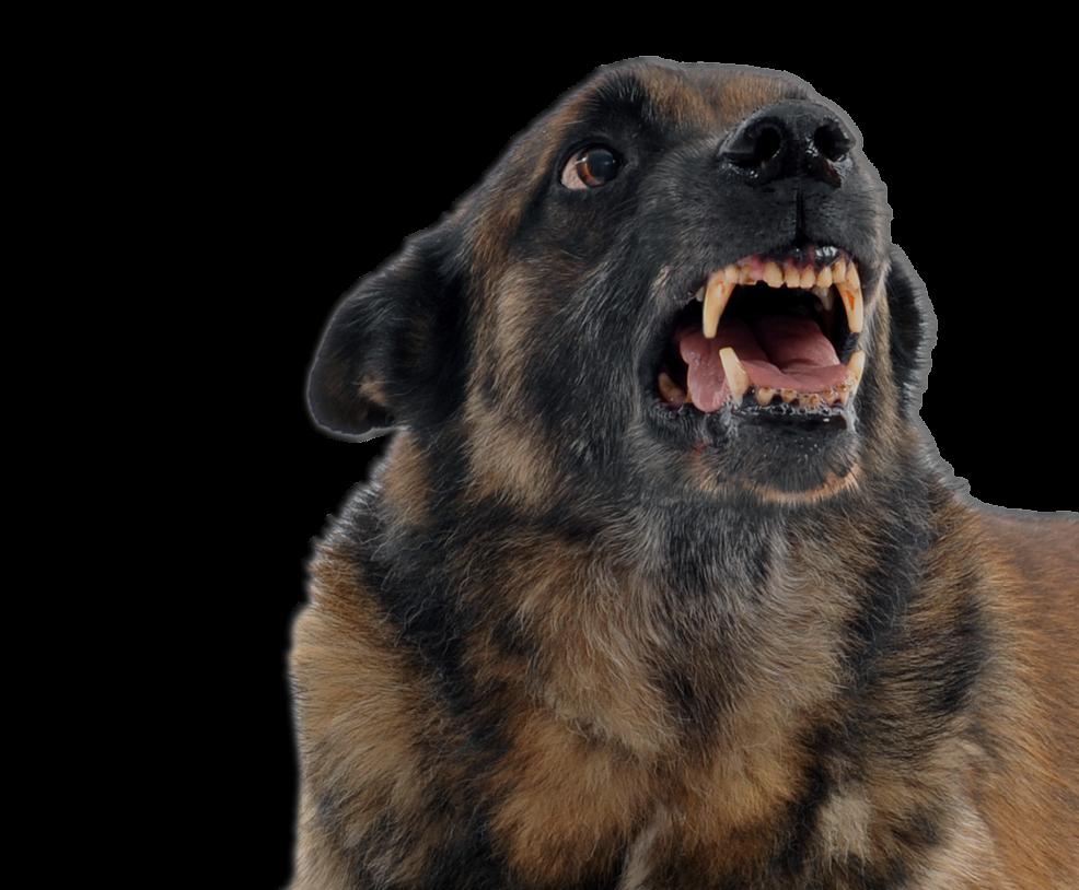 Dog Bite Lawyer.