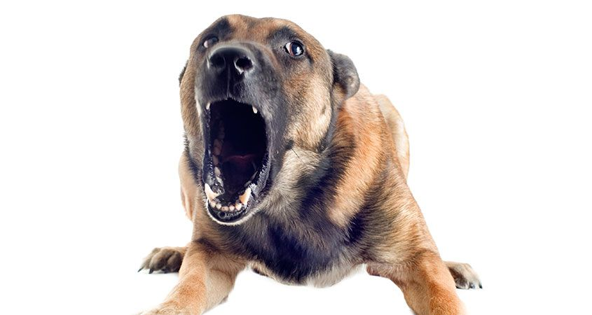 Angry Dog PNG HD Transparent Angry Dog HD.PNG Images..