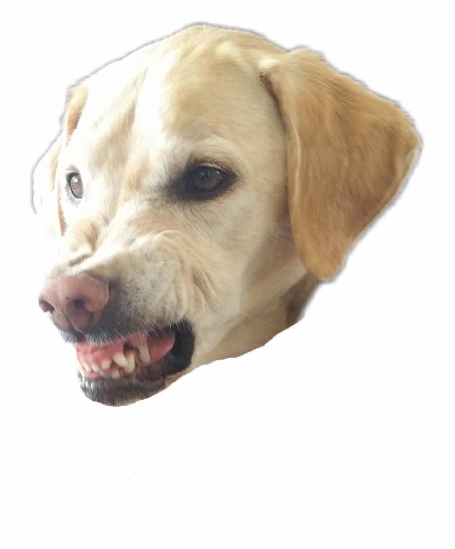 petsandanimals #dogs #angry.