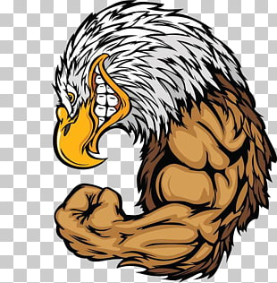 94 Mighty Eagle PNG cliparts for free download.