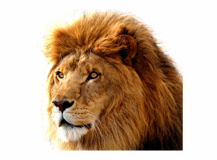 Lion Png Image, Free Image Download, Picture, Lions.