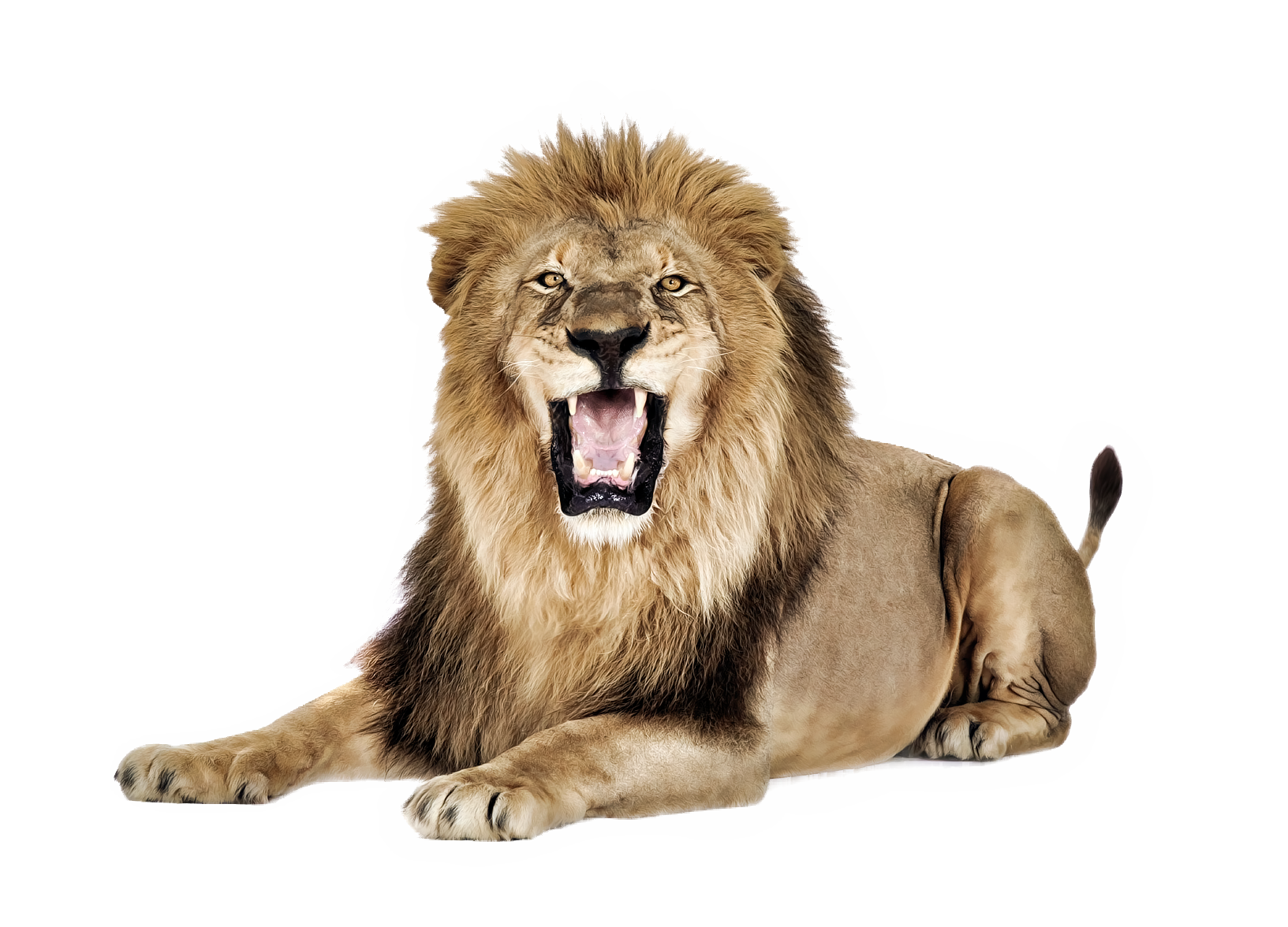 Angry Lion PNG HD Transparent Angry Lion HD.PNG Images..