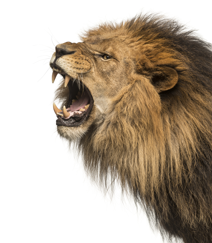 Angry Lion Png (102+ images in Collection) Page 2.