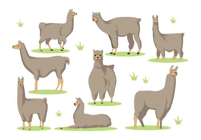 Free Llama Cartoon Vector.