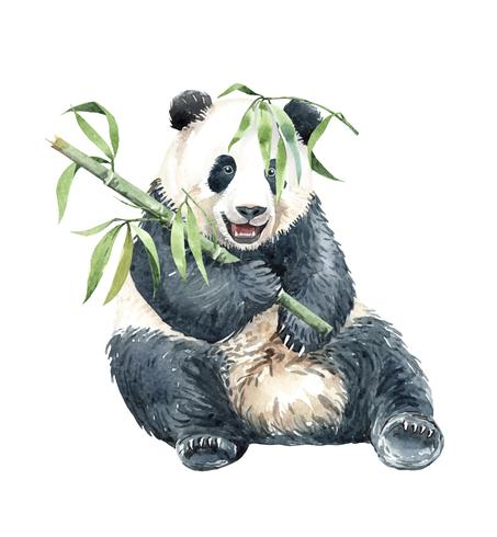 Watercolor Panda with Bamboo.