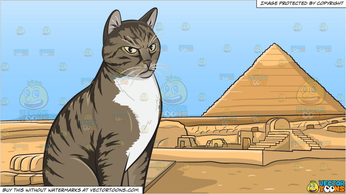 An Angry Domestic Cat and Pyramids Of Giza Background.