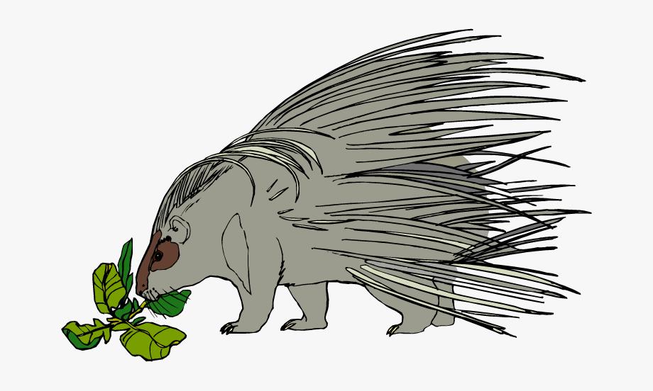 Porcupine Clip Art.
