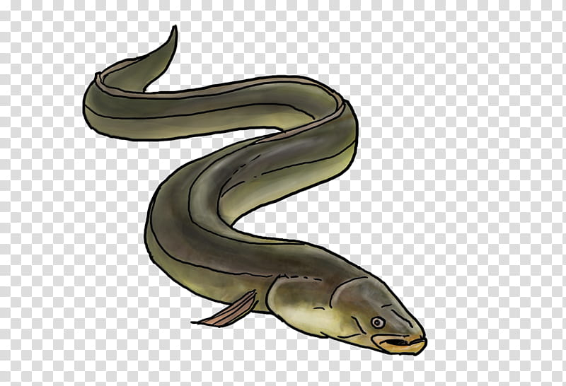 European eel European eel Fishing European anchovy, Fishing.