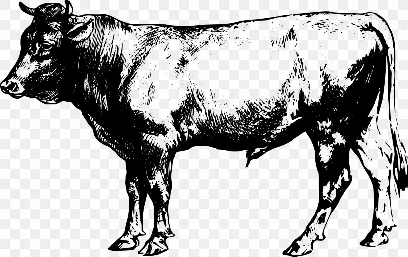 Angus Cattle Beef Cattle Clip Art, PNG, 2400x1515px, Angus.