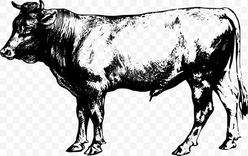Angus Cattle Beef Cattle Clip Art, PNG, 1280x808px, Angus Cattle.